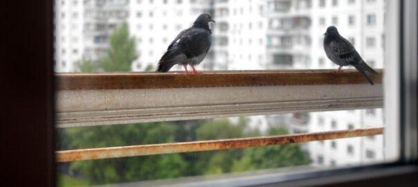 Czyszczenie balkonów Łódź(